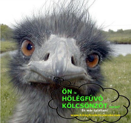 AGGÓDOTT? NEM KELL! ITT TALÁL  HŐLÉGFÚVÓ KÖLCSÖNZŐT! http://hőlégfúvókölcsönzés.com